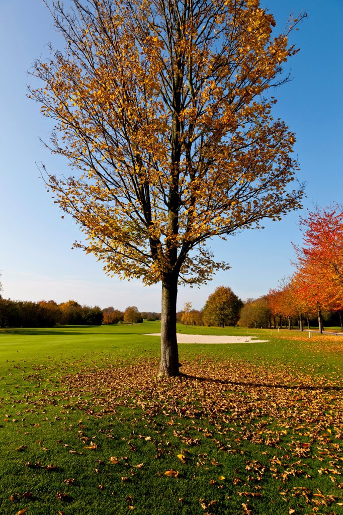 Stock Photo: 1828R-89562 Golf Course with Trees in Autumn, North Rhine-Westphalia, Germany