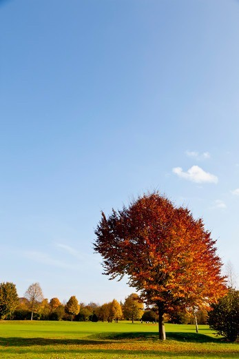 Stock Photo: 1828R-89571 Golf Course with Trees in Autumn, North Rhine-Westphalia, Germany