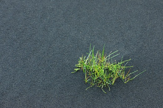 Stock Photo: 1828R-89729 Grass, Volcanic Ash, Eyjafjallajokull, South Iceland, Iceland