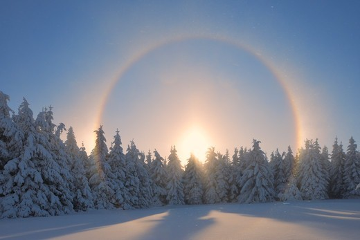 Halo and Snow Covered Trees, Fichtelberg, Ore Mountains, Saxony, Germany : Stock Photo