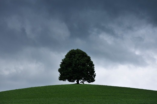 Stock Photo: 1828R-90518 Lime Tree with Storm Clouds, Switzerland