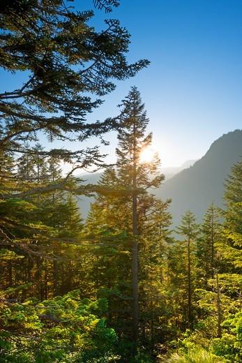 Stock Photo: 1828R-91743 Mount Rainier National Park, Washington State, USA
