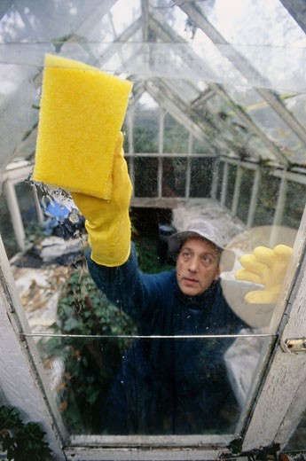 Man cleaning pane of grasshouse : Stock Photo