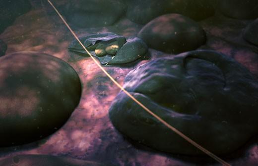 Merozoites of malaria : Stock Photo