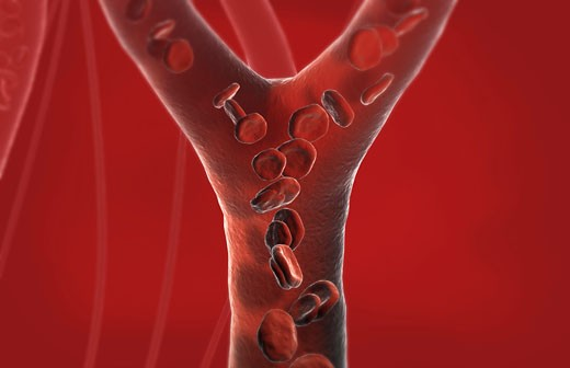 Capillary blood vessels : Stock Photo