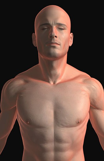 The male upper body : Stock Photo