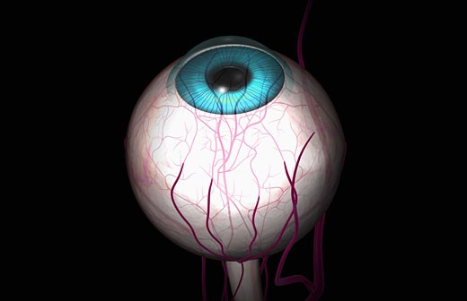 Blood vessels of the eye : Stock Photo