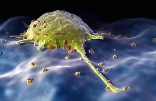 Macrophage : Stock Photo