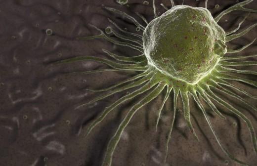 Stem cells : Stock Photo