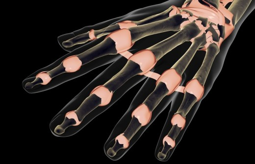 The ligaments of the hand : Stock Photo