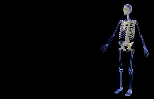 Stock Photo: 1832R-2861 The skeletal system