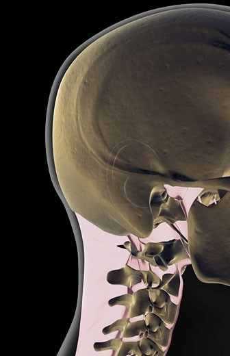 Stock Photo: 1832R-3083 The ligaments of the head and neck