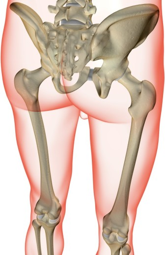 Stock Photo: 1832R-3768 The bones of the lower limb