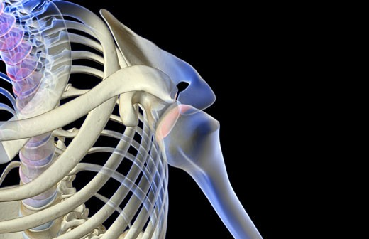 The bones of the shoulder : Stock Photo