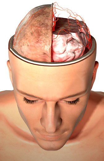 Stock Photo: 1832R-4586 The arteries of the brain