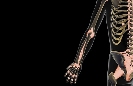 The ligaments of the upper limb : Stock Photo