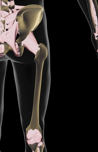 The ligaments of the hip and lower limb : Stock Photo