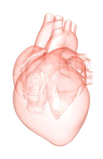 The heart : Stock Photo