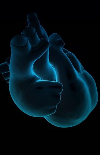 The heart : Stock Photo