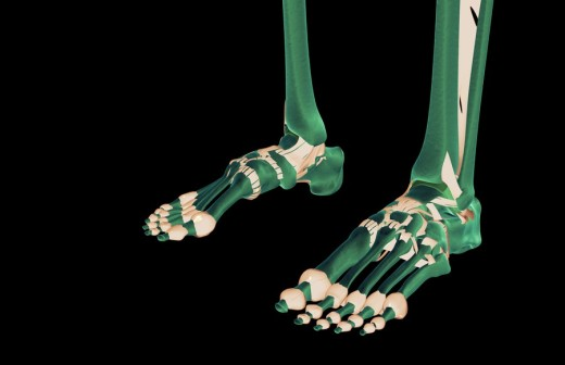 The ligaments of the feet : Stock Photo