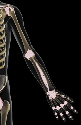 Stock Photo: 1832R-5776 The ligaments of the upper limb