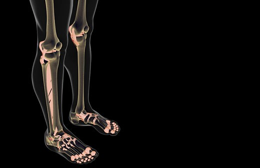 The ligaments of the leg : Stock Photo