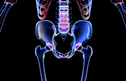 The bones of the lower body : Stock Photo