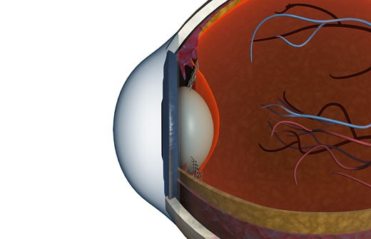 Structure of the eye : Stock Photo