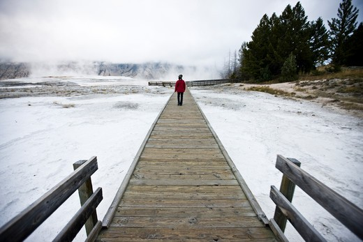 Stock Photo: 1833-224 USA, Wyoming, Tourist walking on boardwalk in Yellowstone National Park
