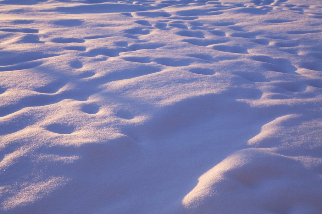 Faded Footprints in Snow : Stock Photo