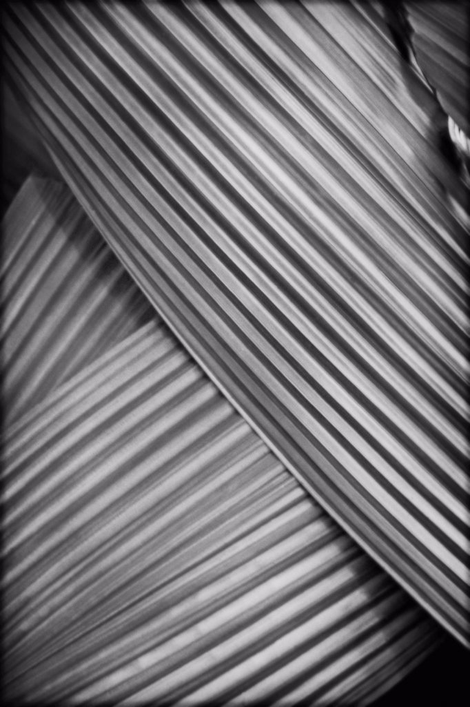 Stock Photo: 1838-13252 Abstract Palm Frond Detail 2