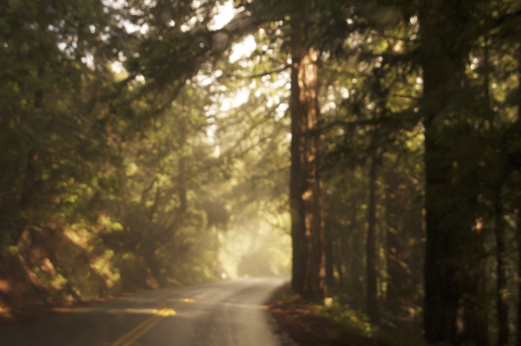 Winding Road With Trees and Mist, California, USA : Stock Photo