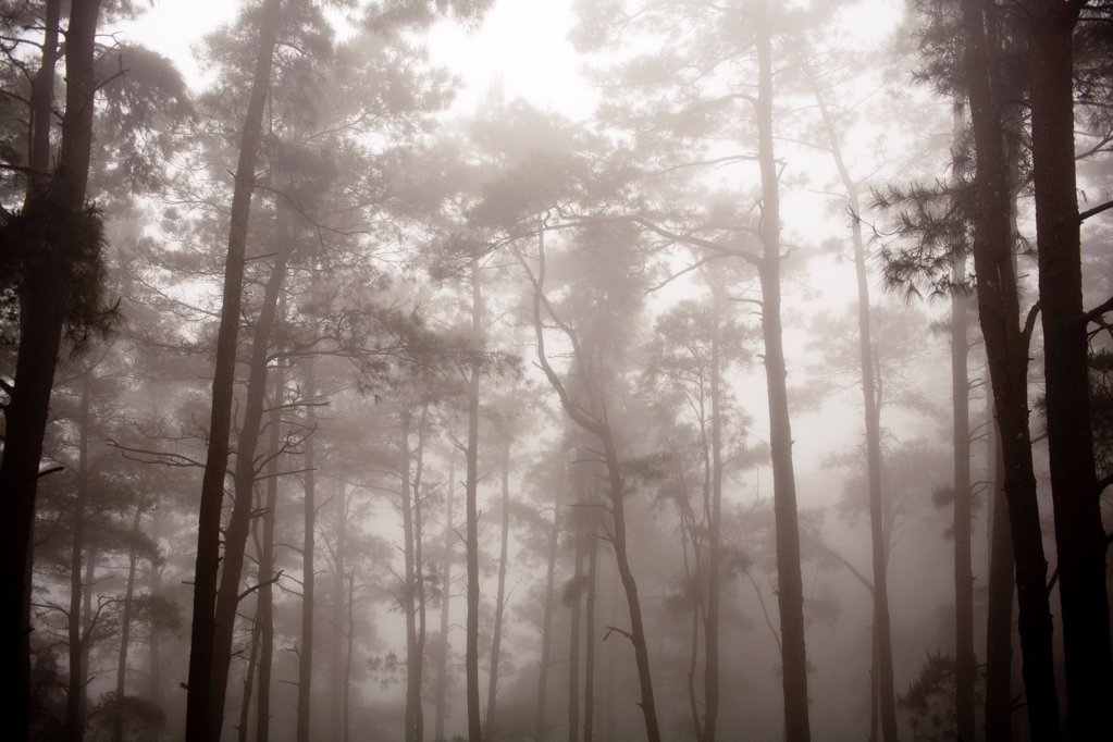 Morning Mist in Forest, Tam Dao, Vietnam, Asia : Stock Photo