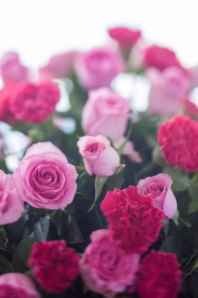 Stock Photo: 1838-13634 Bouquet of Pink Roses