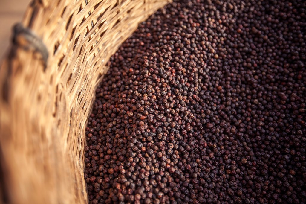 Basket of Black Peppercorns, Vietnam : Stock Photo