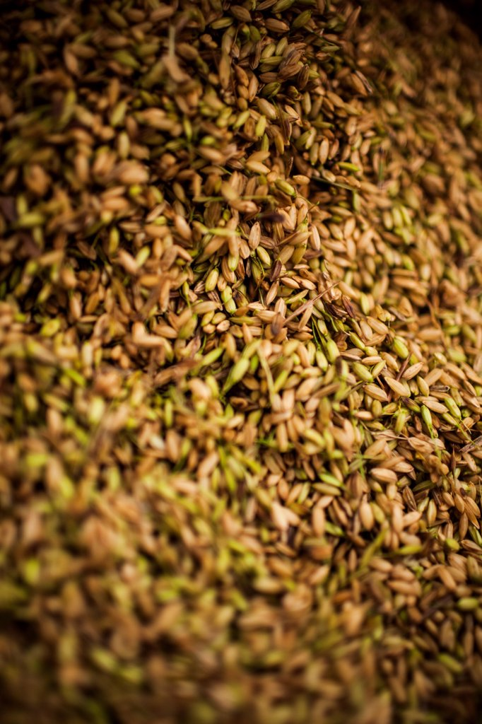 Stock Photo: 1838-13648 Rice Grains, Close Up