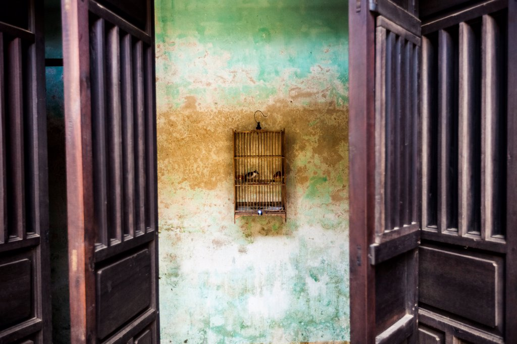 Stock Photo: 1838-13662 Caged Bird Hanging on Wall