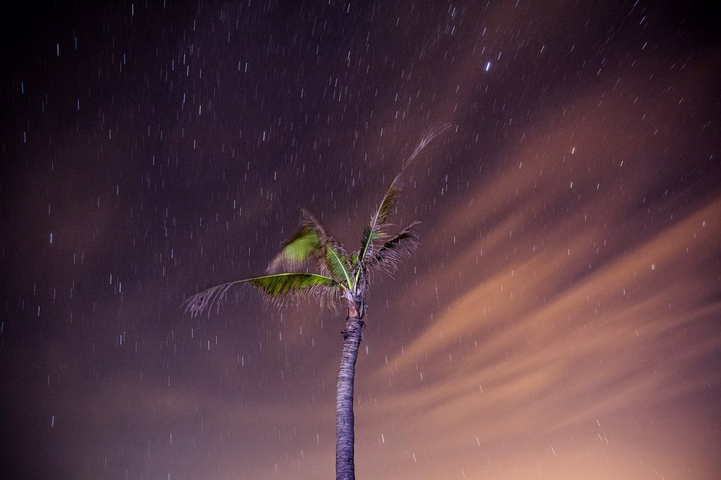 Stock Photo: 1838-13665 Palm Tree and Starry Night Sky, Hoi An, Vietnam