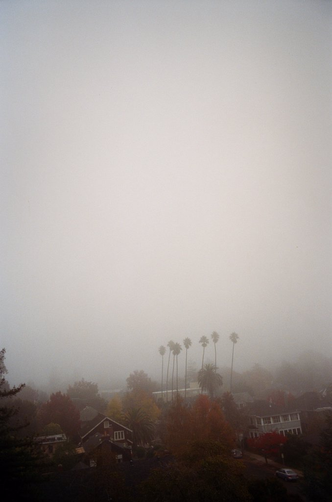 Stock Photo: 1838-13837 Houses and Trees in Fog