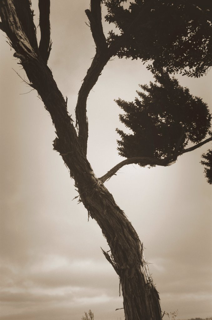 Stock Photo: 1838-13847 Tree Against Cloudy Sky