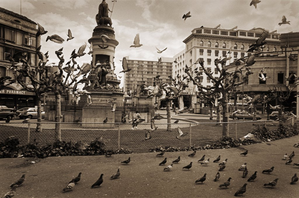 Stock Photo: 1838-13853 Statue and Pigeons, Civic Center Plaza, San Francisco, California, USA
