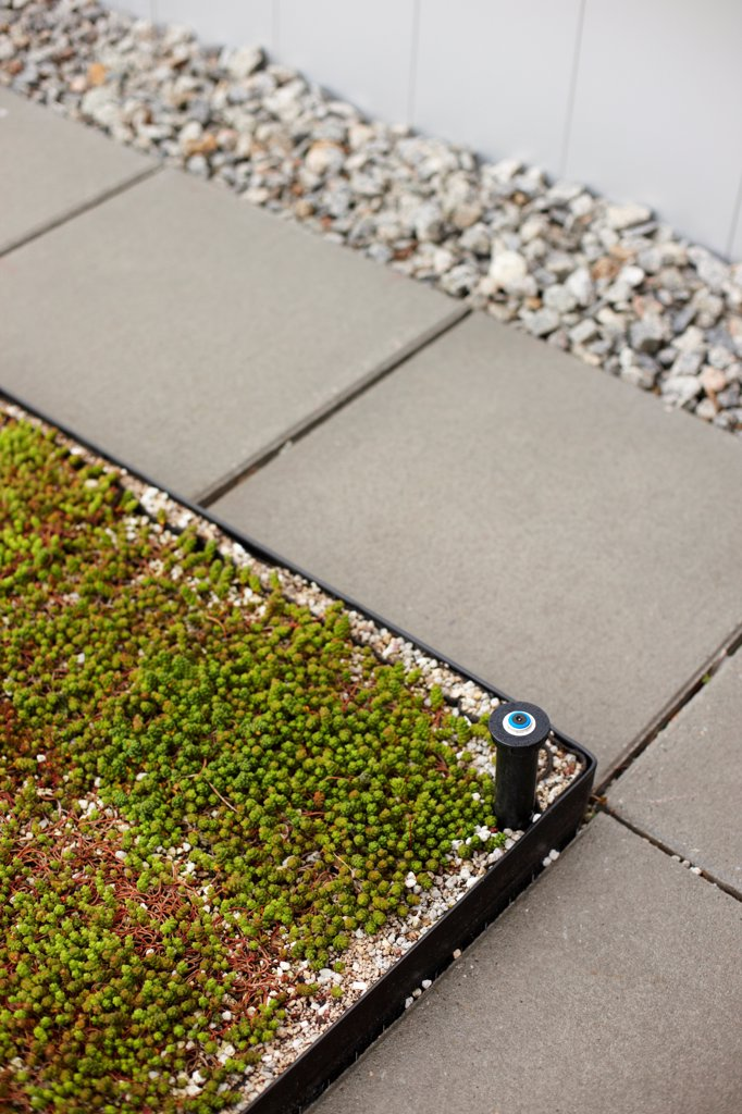 Cement Slab Path Along Garden Groundcover and Sprinkle : Stock Photo