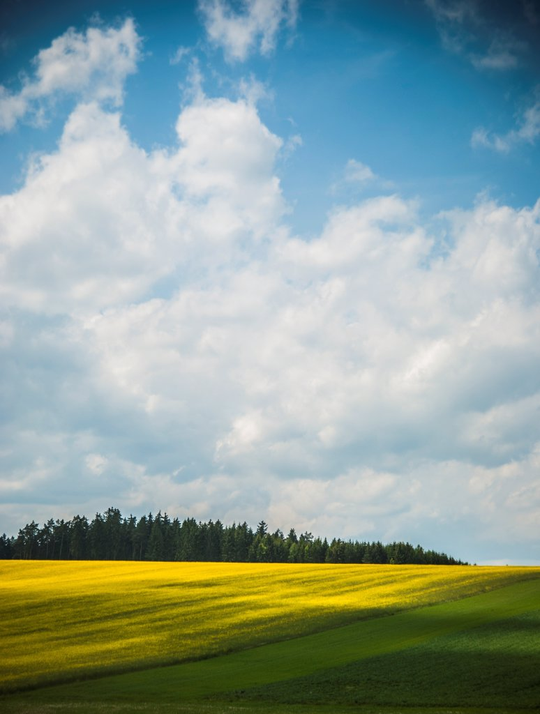 Stock Photo: 1838-13958 Field of Yellow Flowers in Rural Countryside, Germany