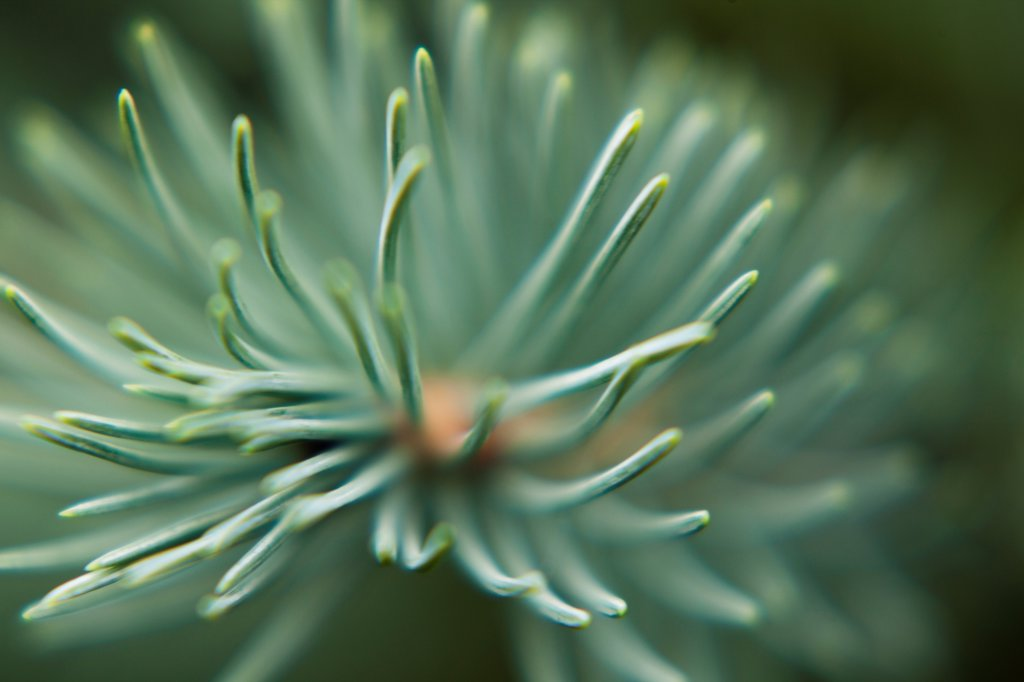 Stock Photo: 1838-14059 Fern Branch, Close Up