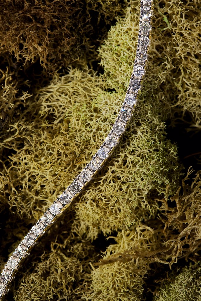 Stock Photo: 1838-14060 Diamond Bracelet on Moss