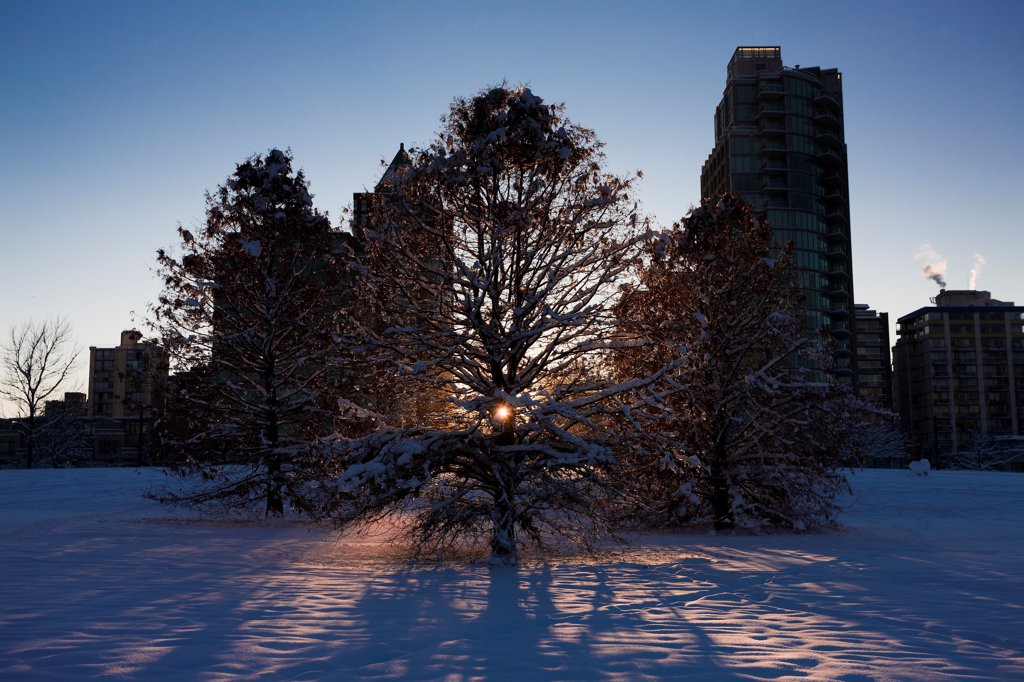 Stock Photo: 1838-14095 Sun Peaking Through Tree in Snowy Urban Park, Vancouver, Canada