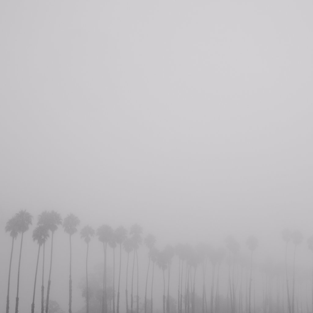 Stock Photo: 1838-14130 Row of Palm Trees in Fog