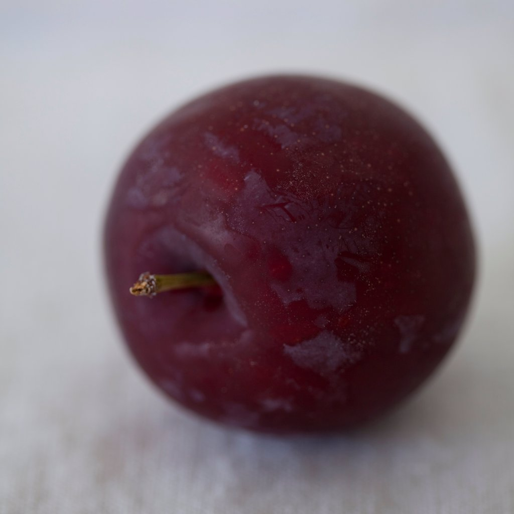 Stock Photo: 1838-14131 Purple Plum, Close Up