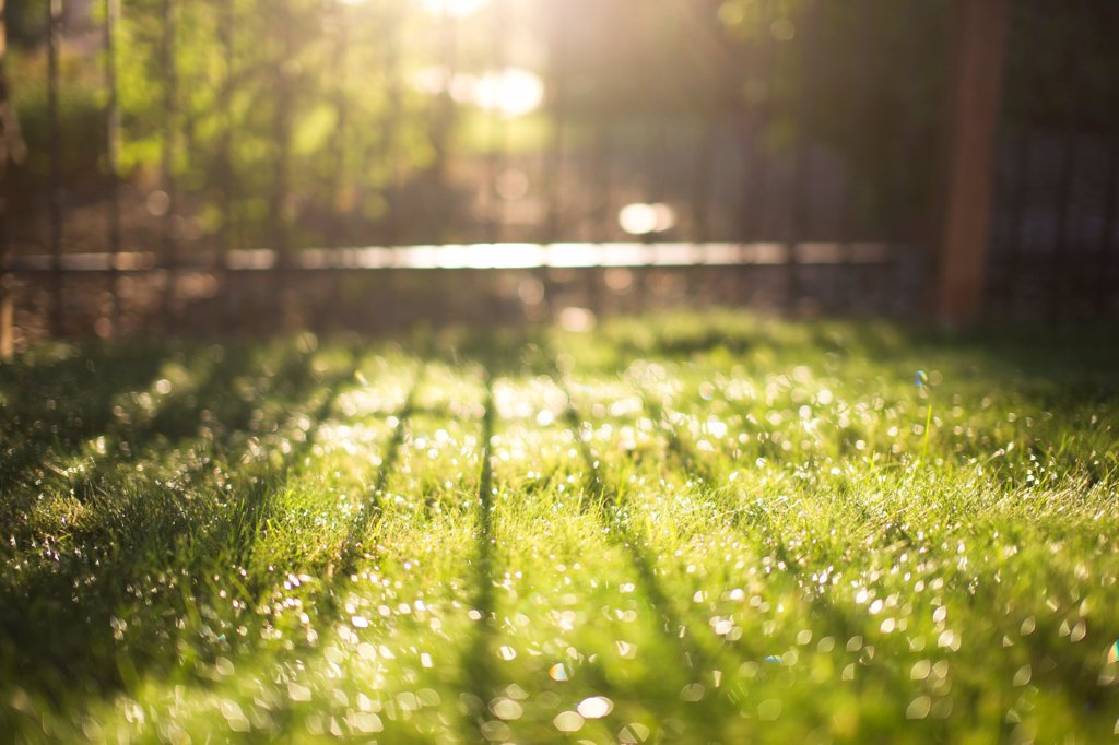 Sunlight and Fence Shadow on Grass : Stock Photo