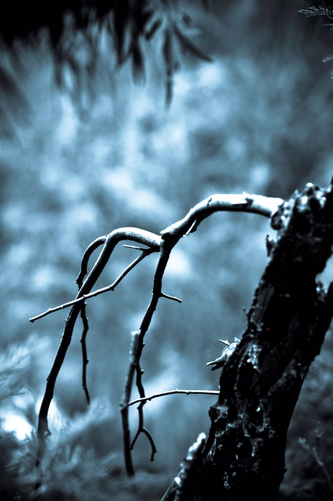 Stock Photo: 1838-14229 Bare Tree Branch, Close-Up